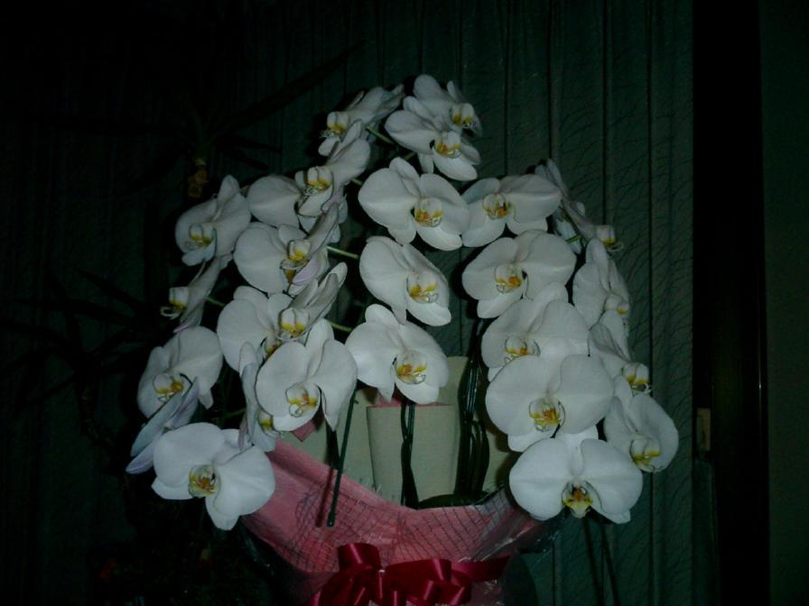 20080503hana